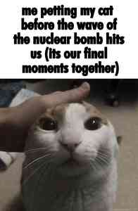 Me Petting My Cat Before the Nuclear Wave Meme Template