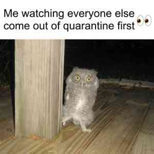 Owl Looks Out Meme Template